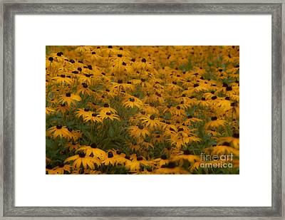 A Field Full Of Flowers Framed Print by Michael Rucci