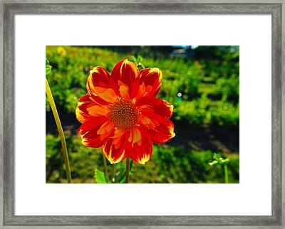 A Flowering Smile  Framed Print by Jeff Swan