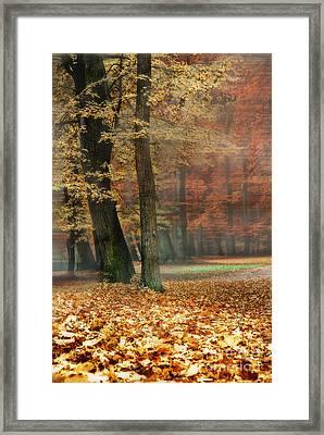 A Foggy Autumn Day Framed Print by Hannes Cmarits