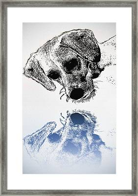 A Friendly Reflection Framed Print by Bill Cannon