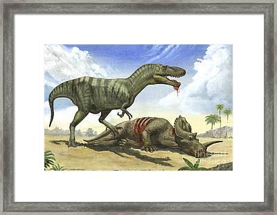 A Gorgosaurus Libratus Stands Framed Print by Sergey Krasovskiy