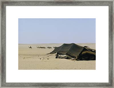 A Herd Of Camels Heading Framed Print by W. Robert Moore