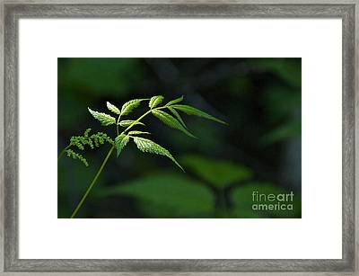 A Light In The Forest Framed Print by Sean Griffin