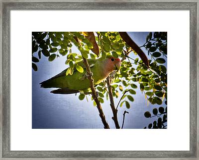 A Little Love  Framed Print by Saija  Lehtonen