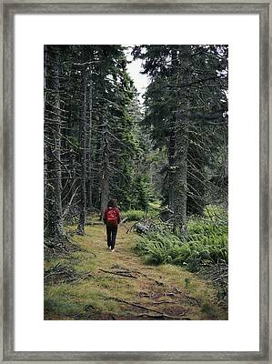 A Lone Hiker Enjoys A Wooded Trail Framed Print by Tim Laman