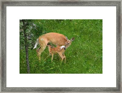 A Mother's Love - Doe And Fawn Framed Print by Christine Till