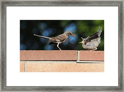 A Mothers Work Is Never Done Framed Print by Lynn Bauer