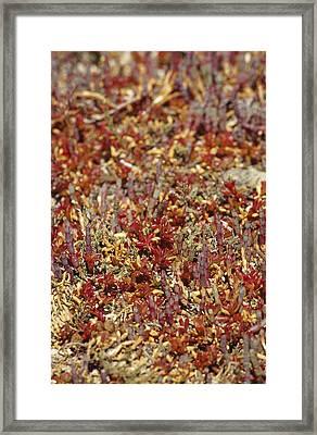 A Myriad Of Bright Red And Orange Framed Print by Jason Edwards
