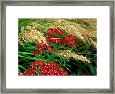 A Naturalistic, Wild Garden That Surrounds And Compliments A Rare Hampshire Coast House Framed Print by Suzie Gibbons