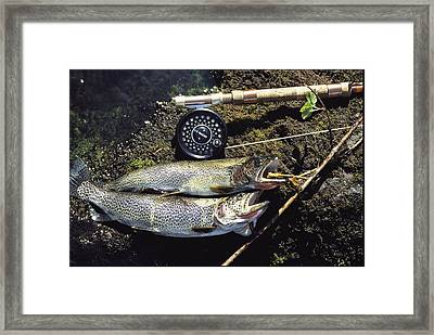 A Pair Of Cutthroat Trout, Salmo Framed Print by Bill Curtsinger