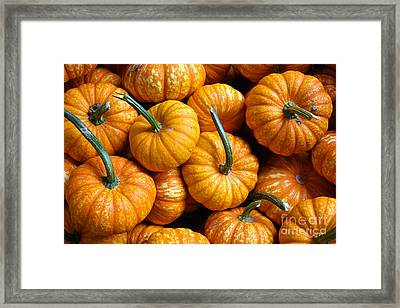 A Peck Of Pumpkins Framed Print by Kami McKeon