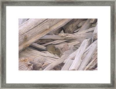 A Pica  Framed Print by Jeff Swan