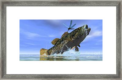 A Redeye Bass Jumps But Just Misses Framed Print by Corey Ford
