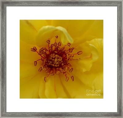 A Roses Heart Framed Print by Eva Thomas