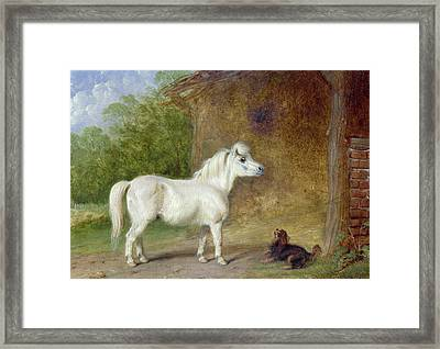 A Shetland Pony And A King Charles Spaniel Framed Print by Martin Theodore Ward