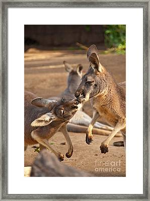 A Show Of Respect Framed Print by Bob and Nancy Kendrick