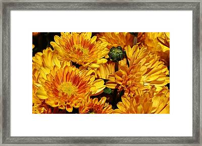A Sign Of Fall Framed Print by Bruce Bley