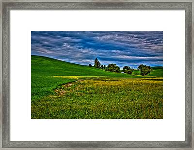 A Sliver Of Canola Framed Print by David Patterson