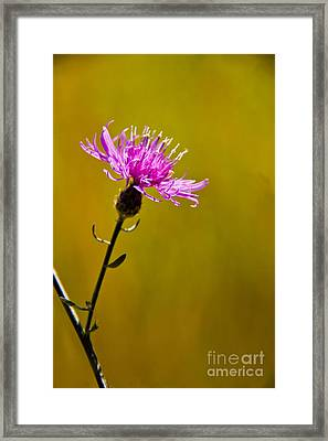 A Solitary Moment Framed Print by Nancy Harrison