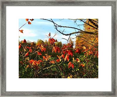 A Splash Of Red II Framed Print by Julie Dant