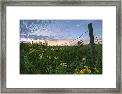 A Summer Evening Sky With Yellow Tansy Framed Print by Dan Jurak