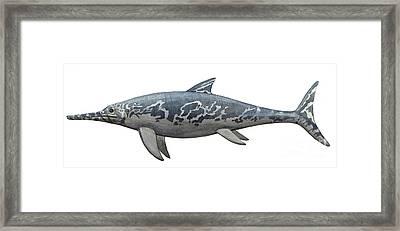 A Temnodontosaurus Burgundiae Framed Print by Sergey Krasovskiy