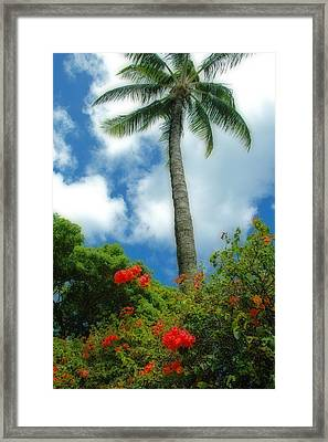A Touch Of The Tropics Framed Print by Lynn Bauer
