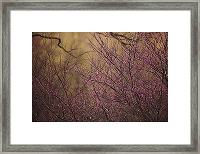 A View Of A Dew-covered Bush In Bloom Framed Print by Joel Sartore