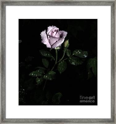 A Vintage Rose Framed Print by Eva Thomas