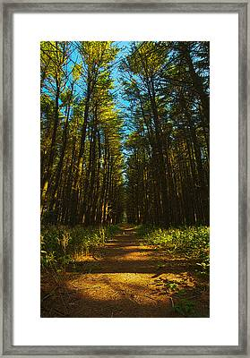 A Walk In The Pines Framed Print by Phil Koch