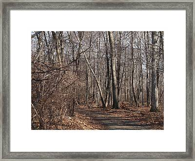 A Walk In The Woods Framed Print by Robert Margetts