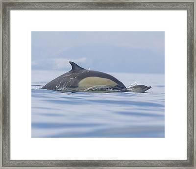 A Watchful Mother Framed Print by Steve Munch