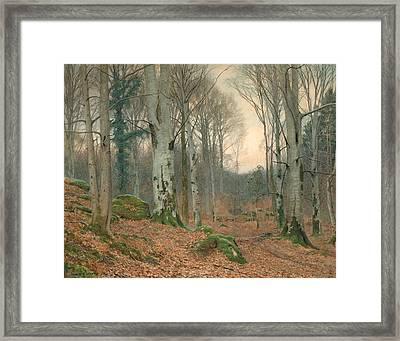 A Welsh Wood In Winter Framed Print by JT Watts