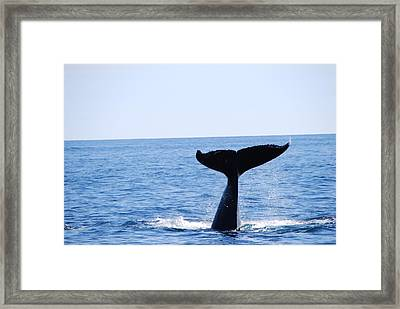 A Whale Of A Wave Framed Print by Lee Yeomans