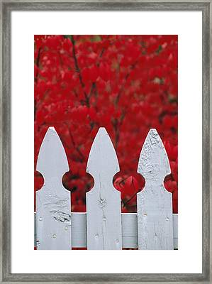 A White Picket Fence Against Red Autumn Framed Print by Lynn Johnson