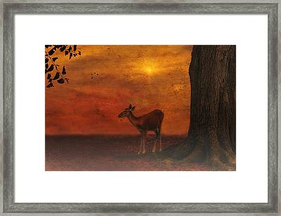 A Young Deer Framed Print by Tom York Images