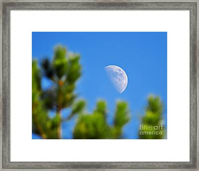 Above The Pines Framed Print by Al Powell Photography USA