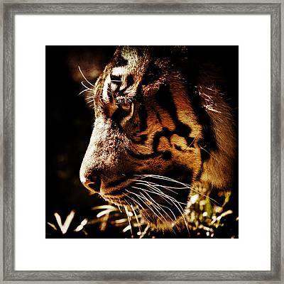 Absolute Focus Framed Print by Andrew Paranavitana