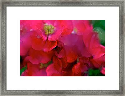 Abstract 277 Framed Print by Pamela Cooper