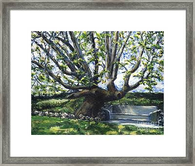 Adamson Home Tree Framed Print by Randy Sprout