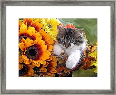 Adorable Baby Animal - Cute Furry Kitten In Yellow Flower Basket Looking Down - Kitty Cat Portrait Framed Print by Chantal PhotoPix