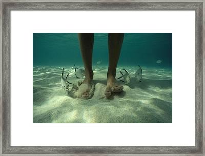 Adult Palometa Fish Dog The Steps Framed Print by David Doubilet