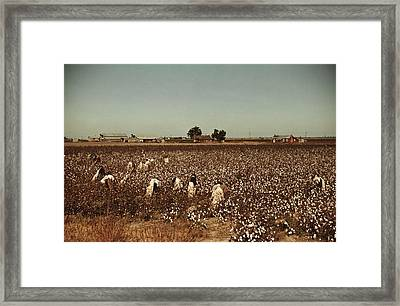 African American Day Laborers Picking Framed Print by Everett