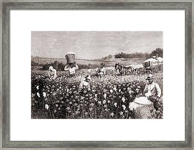 African Americans Picking Cotton Framed Print by Everett