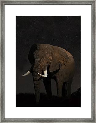African Elephant  Framed Print by Eric Kempson