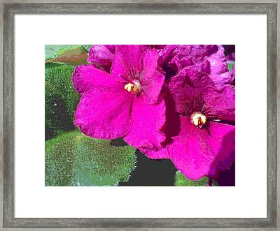 African Violet Texture Framed Print by Padre Art