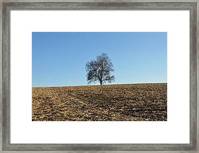After The Harvest Framed Print by Bill Cannon