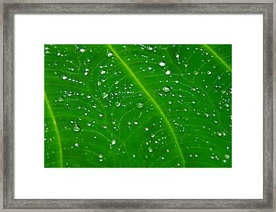 After The Rain Framed Print by Michael Krahl