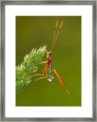 After The Rain Framed Print by Mircea Costina Photography