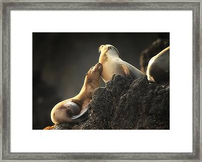 Afternoon Rub Framed Print by Steve Munch